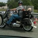 moto-dogs
