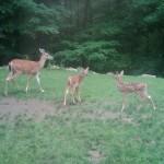 oh-deers