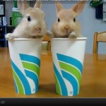 WORDLESS WEDNESDAY: Bunnies in a Cup