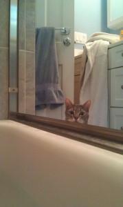 Cat by bath