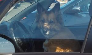 dog drive