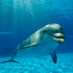 Dolphins Stay Awake for 2 Weeks Straight. Moms Everywhere Jealous.