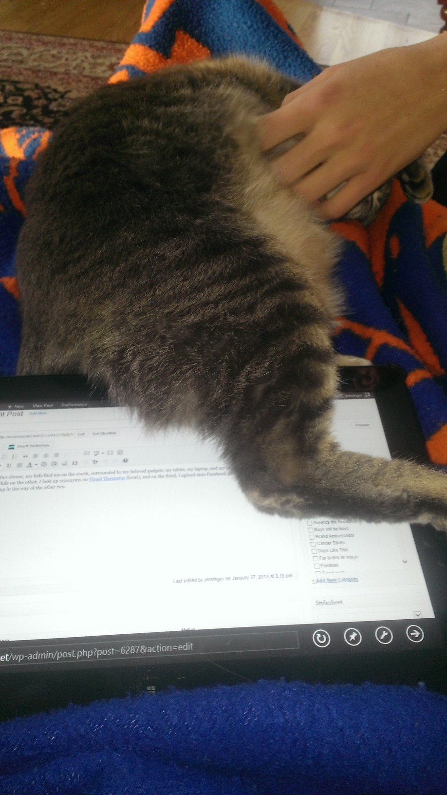 cat on a tablet